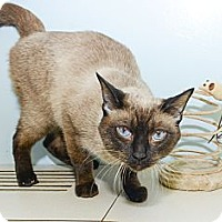 Adopt A Pet :: Wrigley - New York, NY