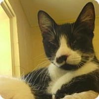 Adopt A Pet :: Checkers - Lake Charles, LA
