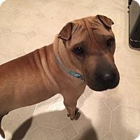 Adopt A Pet :: Charlie - pending - Mira Loma, CA