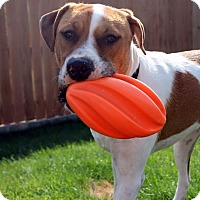 Adopt A Pet :: Apollo - Seattle, WA