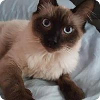 Adopt A Pet :: Winston - Davis, CA