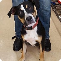 Adopt A Pet :: Lady (courtesy listing) - Homestead, FL