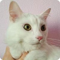 Adopt A Pet :: Bunny - Davis, CA