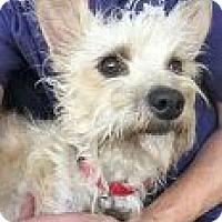 Adopt A Pet :: Cake - Encinitas, CA