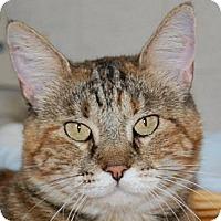 Adopt A Pet :: Ms. Pita - Hot Springs, AR