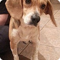 Adopt A Pet :: Ruby - Russellville, KY