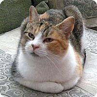 Adopt A Pet :: Madeline - Rohrersville, MD