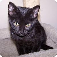 Adopt A Pet :: K-Willow1-Lynn - Colorado Springs, CO
