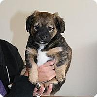 Adopt A Pet :: Zoe - Hastings, NY