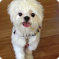 Adopt A Pet :: Zeppelin - Denver, CO