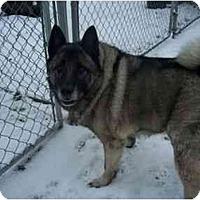 Adopt A Pet :: Fonzy - Belleville, MI