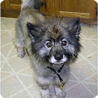 Adopt A Pet :: Frannie - Los Altos, CA