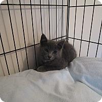 Adopt A Pet :: Nina - Speonk, NY