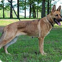 Adopt A Pet :: Gisele - Starkville, MS