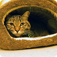 Adopt A Pet :: Katie - The Colony, TX