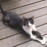 Adopt A Pet :: Tux - Somerset, KY