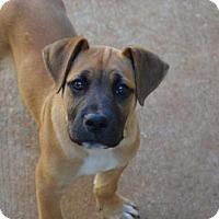 Adopt A Pet :: Echo - Athens, AL