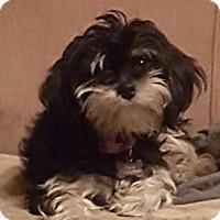Adopt A Pet :: Chloe - Alpharetta, GA
