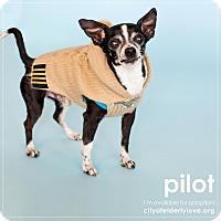 Adopt A Pet :: PILOT! - Philadelphia, PA