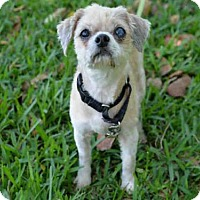 Adopt A Pet :: BIANCA - West Palm Beach, FL