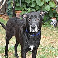 Adopt A Pet :: Max - Edgewater, NJ