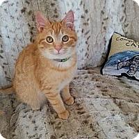 Adopt A Pet :: Captain *bonded w/ Morgan* - Eagan, MN