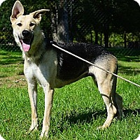 Adopt A Pet :: Shelby - Indianapolis, IN