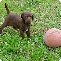 Adopt A Pet :: Sweet Belle mellow and fun - Sacramento, CA