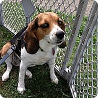 Adopt A Pet :: Nala - Wilmette, IL