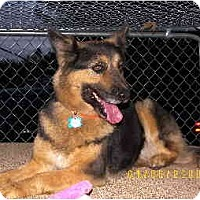 Adopt A Pet :: Godiva - Scottsdale, AZ