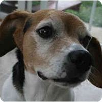 Adopt A Pet :: Molly - RIP - Indianapolis, IN