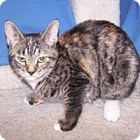 Adopt A Pet :: K-Kameron5-Larue - Colorado Springs, CO
