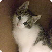 Adopt A Pet :: Mario - East Brunswick, NJ