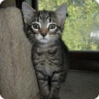Adopt A Pet :: Pharaoh - Milwaukee, WI