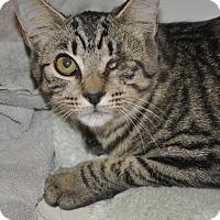 Adopt A Pet :: One-eyed Peeps - New Smyrna Beach, FL
