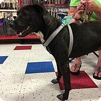 Adopt A Pet :: Bailey - Hernando, MS