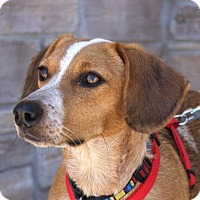 Adopt A Pet :: Sally - Norman, OK