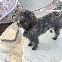 Adopt A Pet :: Jacob, Baby Baby Jacob - Corona, CA