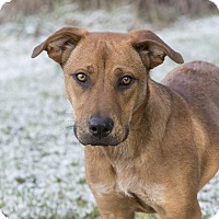 Shepherd (Unknown Type) Mix Dog for adoption in Middletown, Delaware - Carmella