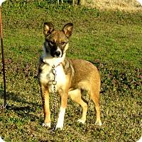 Adopt A Pet :: BREEZY - Newburgh, NY