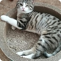 Adopt A Pet :: Winky - Glendale, AZ