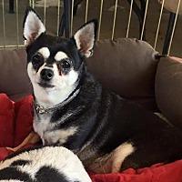 Adopt A Pet :: Nina - Surprise, AZ