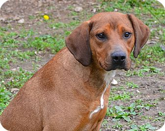 Hound (Unknown Type) Mix Dog for adoption in Newburgh, Indiana - Joker