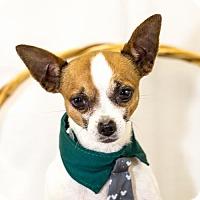 Adopt A Pet :: Spot - Fayetteville, AR