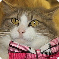Adopt A Pet :: LOLA - Clayton, NJ
