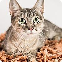 Adopt A Pet :: Bernadette - Eagan, MN
