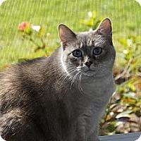 Adopt A Pet :: Emily aka Chubs - Naples, FL