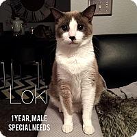 Adopt A Pet :: Loki - Bentonville, AR