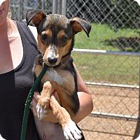 Adopt A Pet :: Hendricks - Groton, MA