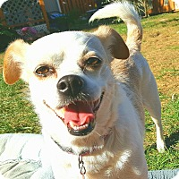 Adopt A Pet :: Cameo - Andalusia, PA
